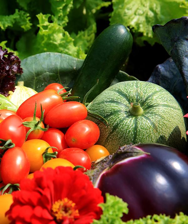 蔬菜解决方案